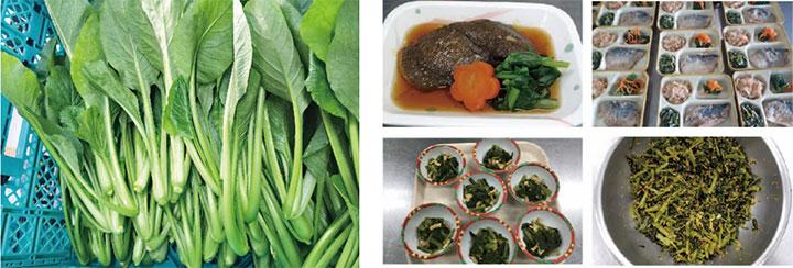 提供された小松菜は様々なメニューに調理された