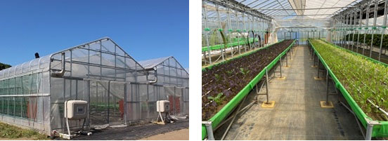 耐候性の高いビニールハウスと高床式砂栽培が導入