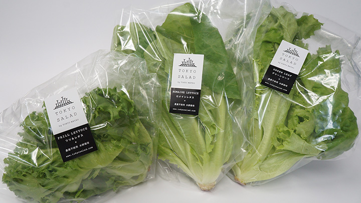 東京メトロが生産した葉野菜の「とうきょうサラダ」