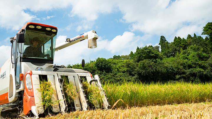 「多古米」をおいしく育てる 草取りのお手伝い参加者募集 ちば食べる通信