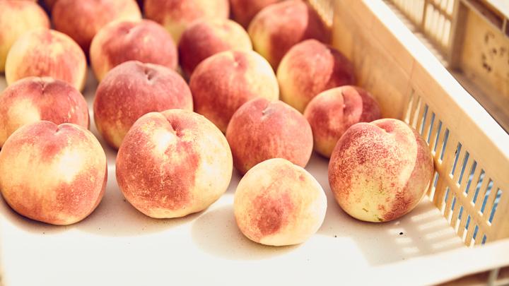 山梨県笛吹市の「なつっこ」「川中島白桃」都内ではなかなか味わえない、とれたての桃を提供