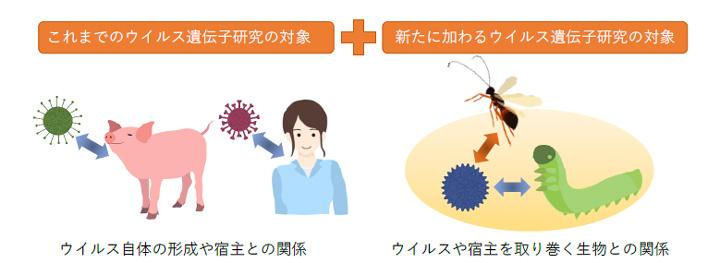 ウイルス自体の構造や宿主を制御する遺伝子の研究に加え、ウイルスや宿主を取り巻く生物を含めた生物間相互作用の中で働く遺伝子の研究へ