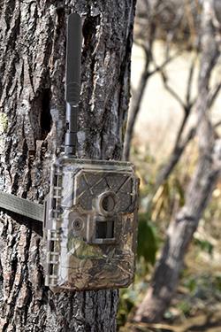 クマ被害対策に通信機能付トレイルカメラ「WAMキャプチャー04G」を導入