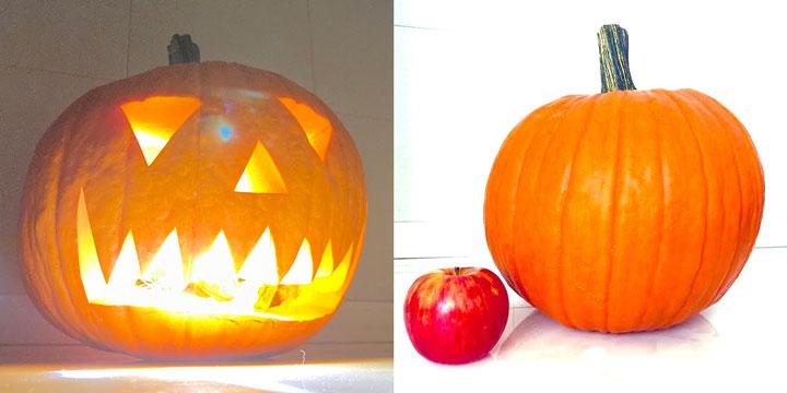 ハロウィンかぼちゃ・りんごと比較するとその大きさは歴然