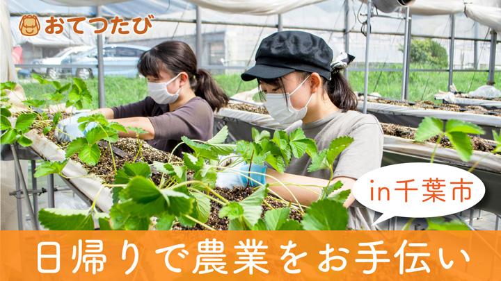 千葉市と連携で「若年層と農業者のマッチング事業」開始 おてつたび