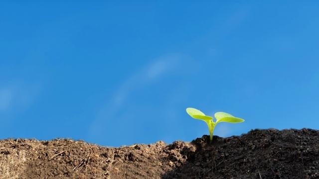 2021年に食品・農業分野で注目すべき技術トップ5発表 米ラックスリサーチ社
