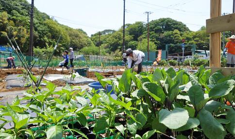 市民農園に多大な健康効果-アグリメディアと東大が共同調査