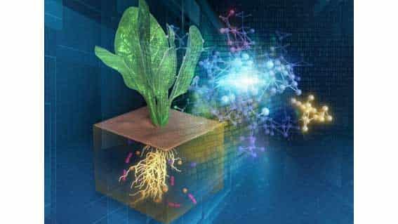 農業生態系ネットワークのデジタル化に成功ー理研などのグループ