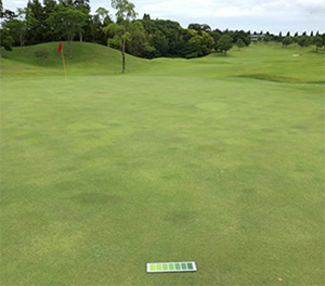 施用効果試験を実施した千葉県内のゴルフ場