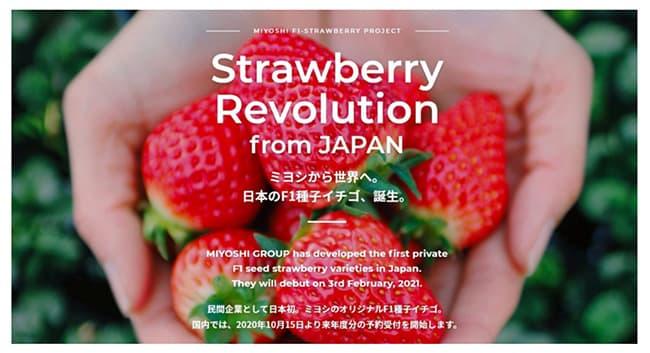 民間レベル日本初の「F1種子イチゴ」