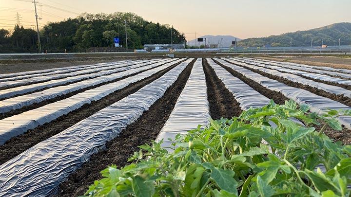 長浜市の小谷城スマートIC栽培実験農場