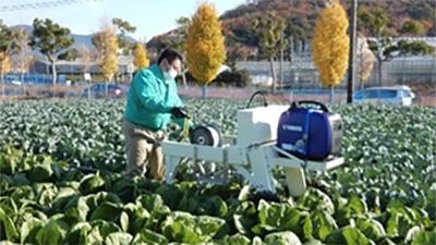 腰を曲げた辛い作業を解消 越冬ハクサイの頭部結束機を開発 農研機構