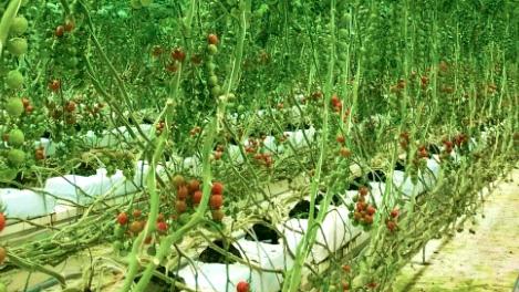 農業分野などで共同研究で包括連携協定を締結 近畿大学とイチネンホールディングス