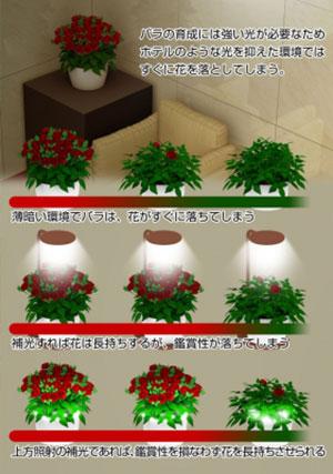 ミニバラに3パターンの照明をあてて検証