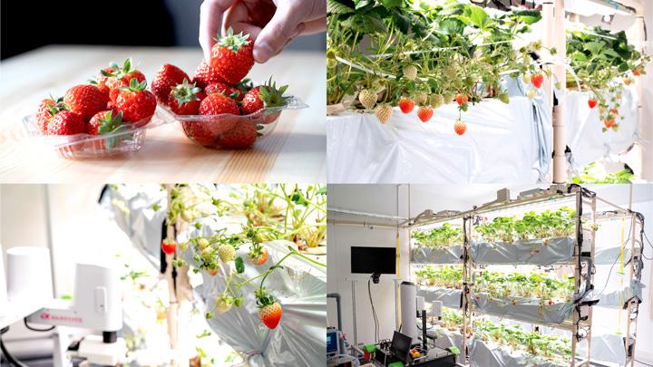 植物工場向けの授粉・収穫ロボットを開発「HarvestX Lab」設立