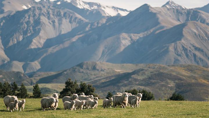 ニュージーランドにバーチャル出張「アグリテック2021」開催
