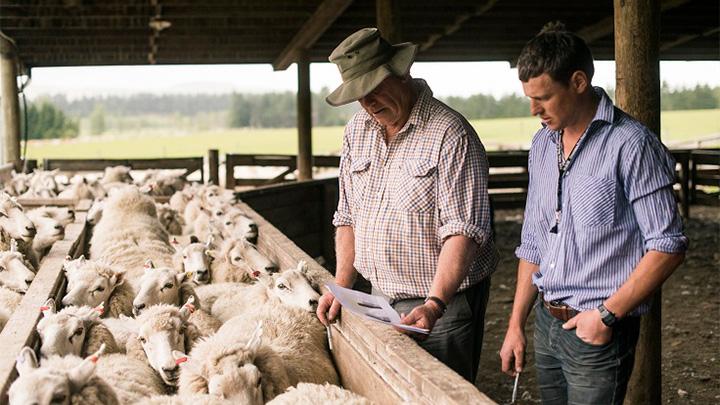 ニュージーランドの畜産