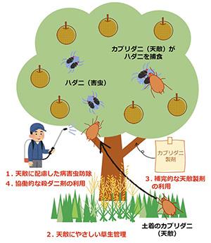 <w天>防除体系を構成する4つのステップ