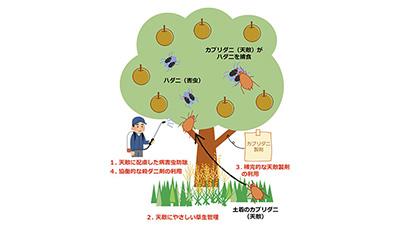 天敵を主体としたハダニ類の防除体系作業手順書 リンゴ・ナシ編など公開 農研機構
