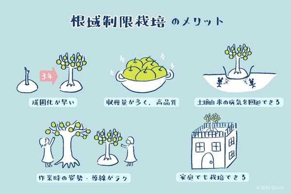 根域制限栽培のメリット