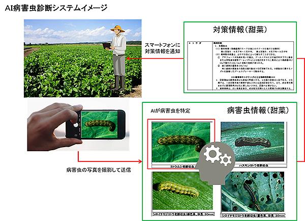 AIが病害虫を特定 営農指導活用へ診断システム構築 十勝農協連と富士通