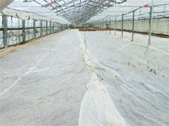 【現場で役立つ農薬の基礎知識 2013】[11]暑い夏の施設病害虫防除にはハウスの蒸し込み処理が最適!