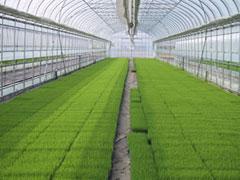 【現場で役立つ農薬の基礎知識 2013】[1]生産者の省力化に寄与する水稲育苗箱処理剤