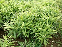 【現場で役立つ農薬の基礎知識 2013】[7]土壌消毒剤の上手な使い方