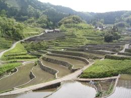 水の共有で成り立つ日本の水田