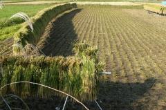 【現場で役立つ農薬の基礎知識 2013】[14]水稲栽培の仕上げ防除