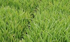【現場で役立つ農薬の基礎知識 2014】[1]水稲種子消毒法のポイント