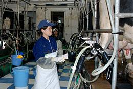 新規就農者は酪農家の2割に達している