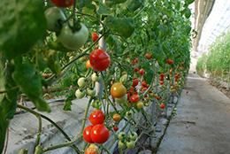 【現場で役立つ農薬の基礎知識 2014】[13]IPMの継続的な取り組みのために