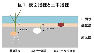 図1 表面播種と土中播種