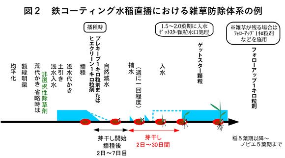 図2 鉄コーティング水稲直播における雑草防除体系の例