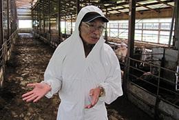 豚舎見回る新田会長。今も肉質改善に意欲を燃やす