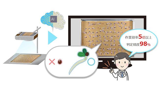 タキイ種苗が種の発芽検査に開発協力 AI支援で作業効率5倍以上に NTTテクノクロス