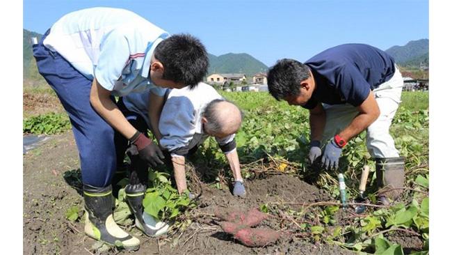 療法士(写真左)付き添いのもと、サツマイモの収穫に取り組む患者(写真左から2人目)