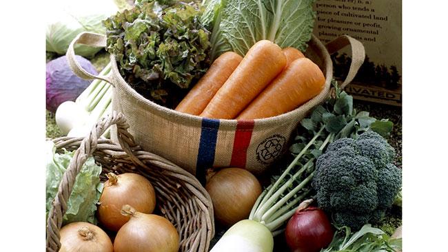 おいしくて高栄養 季節の変わり目におすすめ「旬野菜」紹介 タキイ種苗