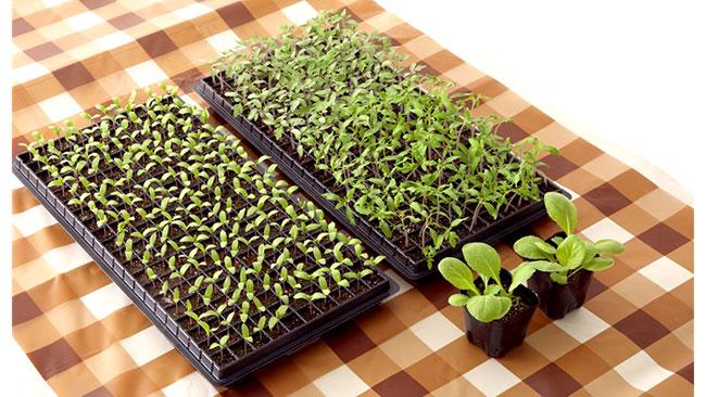 春の家庭菜園に 発芽・育苗マットカバー「まもるくん」新発売 タキイ種苗