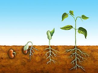 世界の種子市場 世界的な需要の分析と機会展望 レポート発売