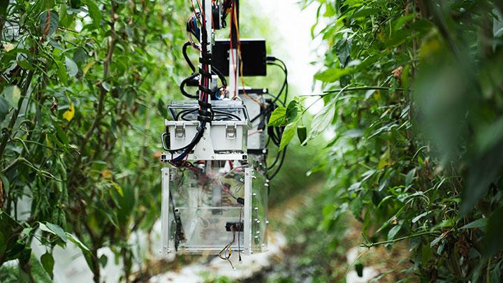 農場を移動する自動収穫ロボット「L」。非接触型でコロナ対策にも
