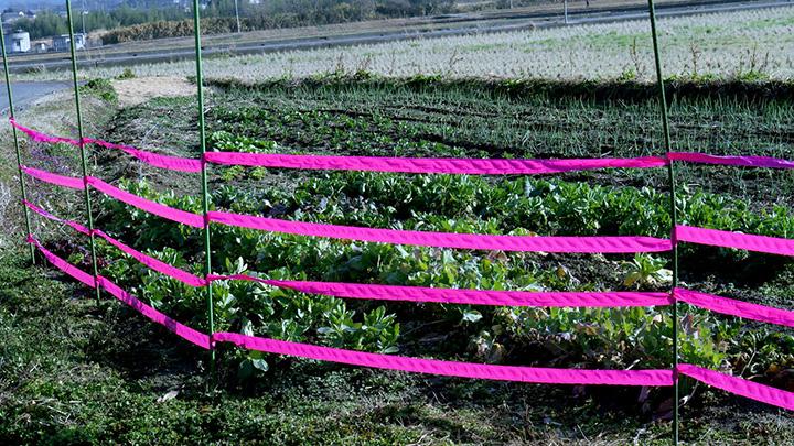 独自開発「長持ちピンク」で害獣対策 畑や木を守る「識別テープ」新発売