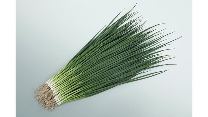 低温期の伸長性、肥大性に優れる小ネギ「菊千代」種子を発売 サカタのタネ