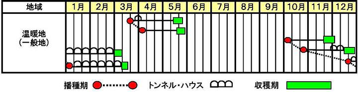 チンゲンサイ「翠勲」の作型図
