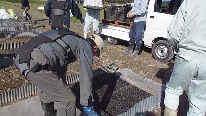 「ダーウィン ハコベルデ」を装着して苗箱の運搬作業を行う米生産者