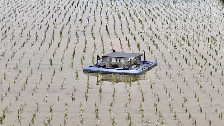 有機米デザインが開発中の田んぼの雑草を抑制する自動ロボット