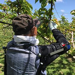 果樹栽培で「TASK AR3.0」を使用