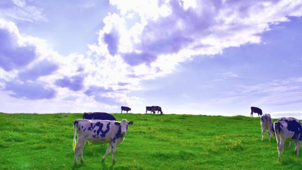 六本木ヒルズに1日限りの「六本木牧場」が登場 中央酪農会議