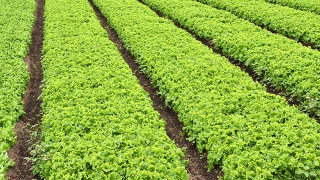 本田防除の決め手は計画的な予防散布【現場で役立つ農薬の基礎知識2020】